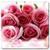 2015 valentine Wallpaper icon