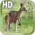 Kangaroo Australia LWP app for free
