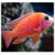 Fish Live Fun For Xperia icon