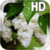 Flower Lilac Drops LWP icon