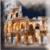 Rome Wallpaper app for free