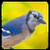 Bird Sound Song Ringtone app for free