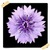 Chicory Flowers Onet Classic Game icon