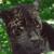 Zoo : Amazon Wild Animals app for free