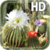 Cactus Flowers LWP app for free