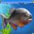 Piranha Aquarium 3D app for free