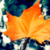 Autumn Leaf Live Wallpapers app for free
