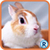 Rockin Animal Puzzle app for free