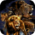 Amazing Lions Live Wallpaper icon