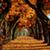 Fall Wallpaper Live icon