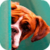Cute Boxer Puppy LWP icon