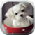 Puppy in a Cup LWP app for free