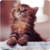 Lovely Kitten Live Wallpaper app for free