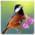 3D Birds Live HQ Wallpaper icon