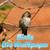 Humming Bird live wallpaper app for free
