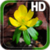 Spring Yellow Flower LWP app for free