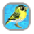 Jump Bird app for free