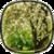 Flowers Pro LWP HD icon