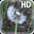 Dandelion Live Wallpaper HD Free icon