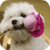 Bichon Puppy Live Wallpaper icon