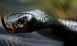 Snake Lovers Wallpaper screenshot 1/4