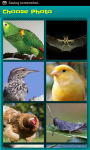 Bird Picture Puzzle screenshot 2/6