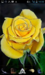 Yellow Rose LWP screenshot 1/3