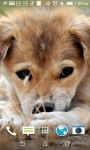 Cute Puppy HD Live Wallpapers screenshot 4/4