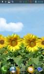 Sunflowers lwp screenshot 1/4