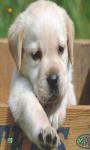 Dog Wallpapers HD screenshot 3/6