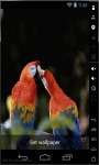 Parrot Loves Live Wallpaper screenshot 1/2