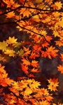 Beautiful Pictures in the autumn Wallpaper screenshot 6/6
