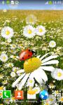 Ladybug Live Wallpapers Top screenshot 2/6
