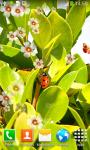 Ladybug Live Wallpapers Top screenshot 3/6
