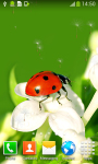 Ladybug Live Wallpapers Top screenshot 5/6