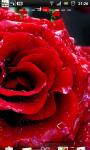 Red Rose Live Wallpaper SMM screenshot 3/3