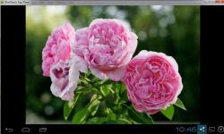 Beautiful Roses Wallpaper Free screenshot 1/2