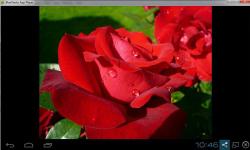 Beautiful Roses Wallpaper Free screenshot 2/2