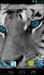 Best White Tiger Wallpaper HD screenshot 3/3