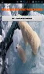 Polar Bear Live Wallpaper Best screenshot 1/4