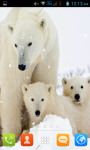 Polar Bear Live Wallpaper Best screenshot 2/4