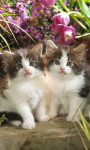 Cute Persian Cats Live Wallpaper screenshot 5/6