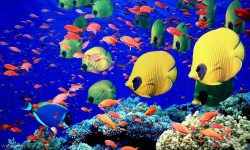 Underwater World Live wallpaper 2015 screenshot 1/3