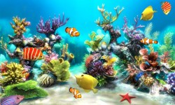 Underwater World Live wallpaper 2015 screenshot 2/3