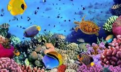 Underwater World Live wallpaper 2015 screenshot 3/3