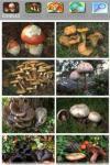 Cerca Funghi source screenshot 6/6