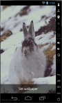 Snow Bunny Live Wallpaper screenshot 1/2