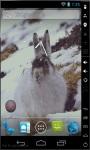 Snow Bunny Live Wallpaper screenshot 2/2