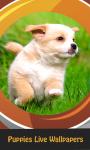 Top Puppies Live Wallpapers screenshot 1/6