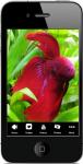 Freshwater Aquarium Fish 2 screenshot 1/4